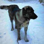 """Resque"" dog in Seven Rila Lakes   FinnsAway"
