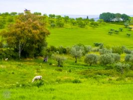 Lush and green scenery