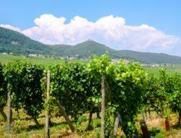 Vineyards and old villages in Alsace, France