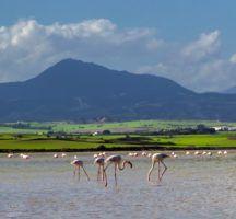 Larnaka Salt Lake flamingos | Larnaca Cyprus FinnsAway Travel Blog
