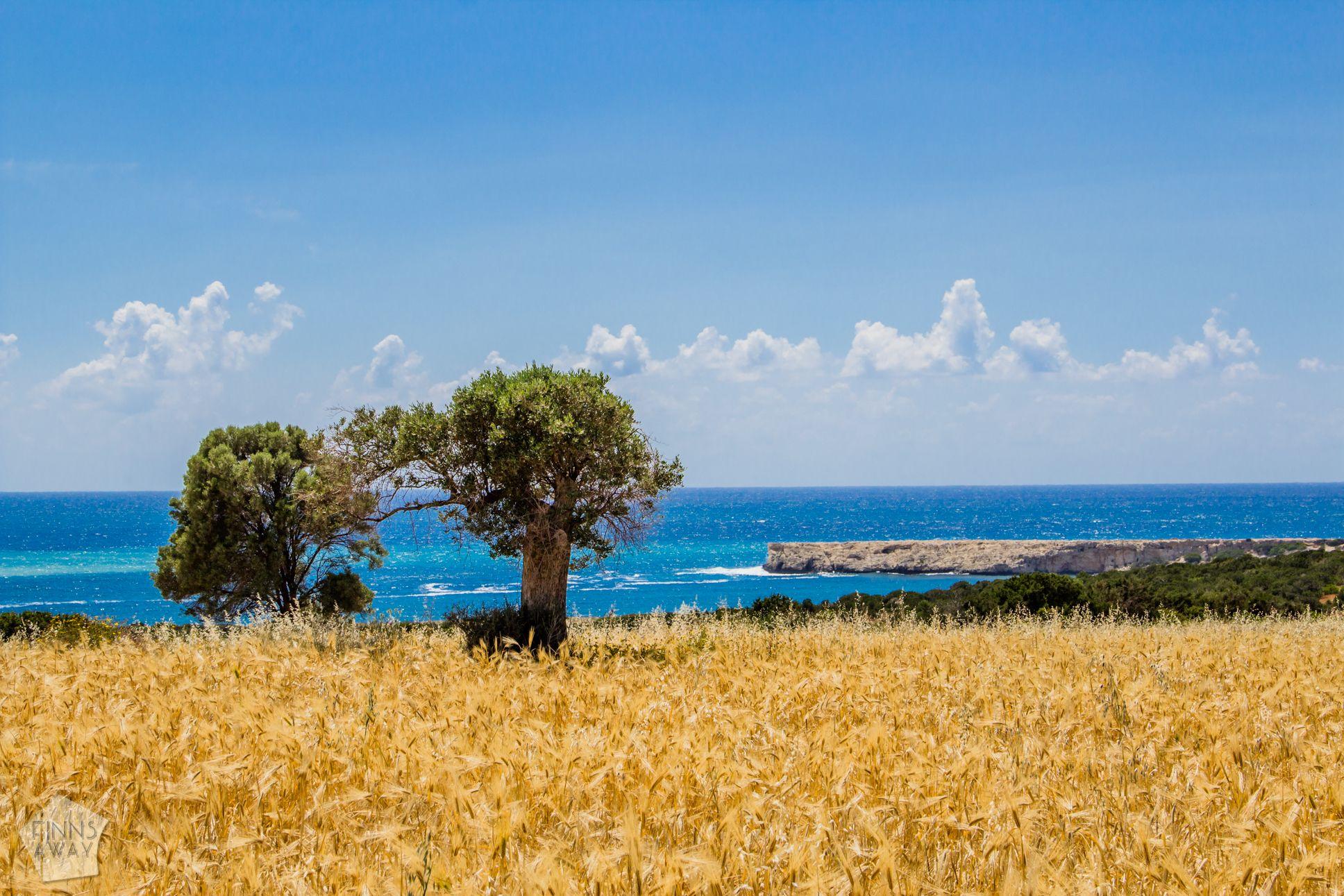 Beautiful scenery near Lara Beach in Paphos district, Cyprus | FinnsAway Travel Blog