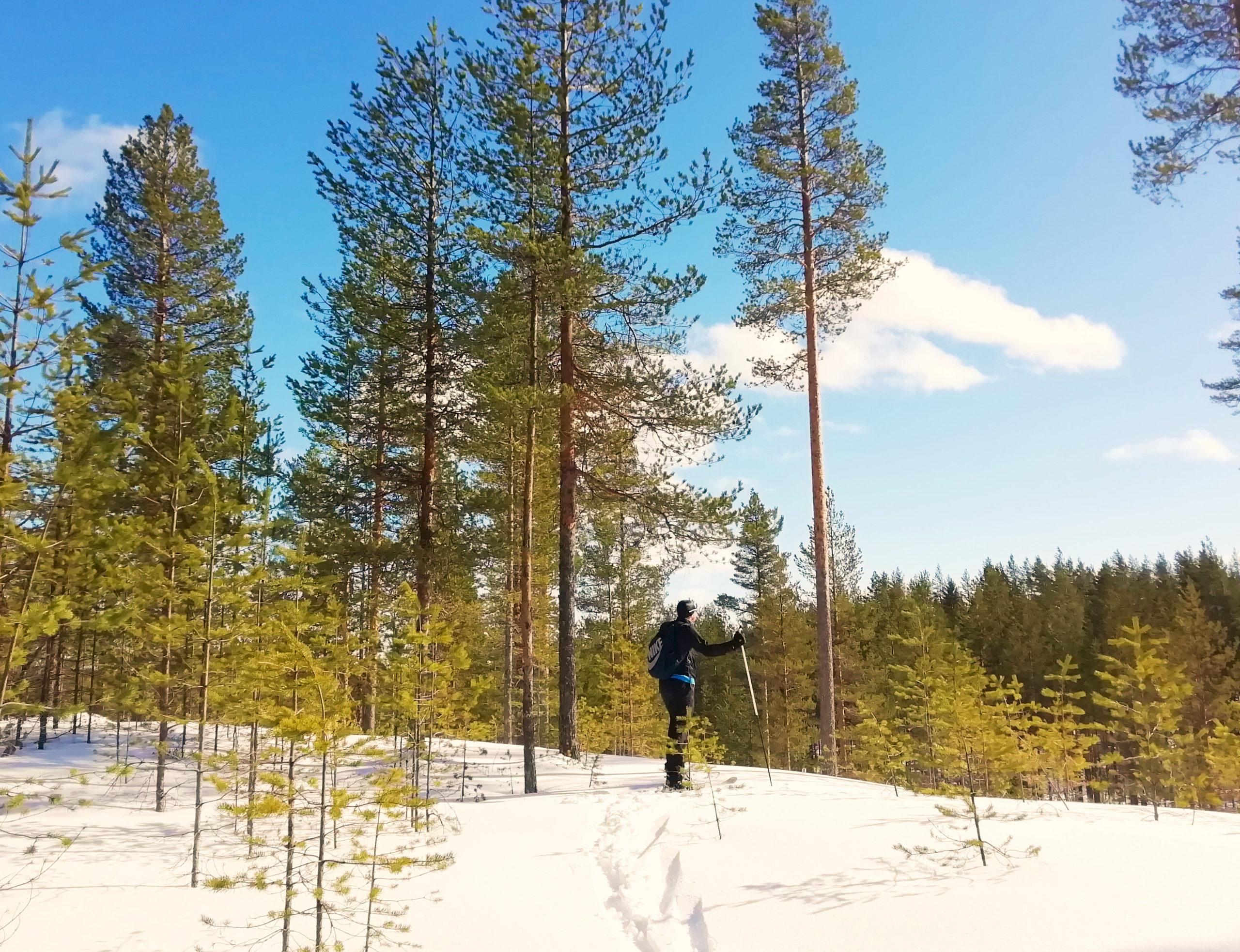 Snowshoeing in Rokua, Finland | FinnsAway