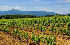 Wine tasting in Domaine Sol Payre winery | France | La Mignane Camping | FinnsAway Travel Blog