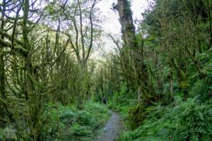 Machakhela national park batumi georgia finnsaway 2018-13