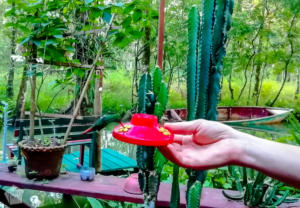 Feeding a humming bird in Casa Perico | Travel guide to Rio Dulce and Livingston in the Caribbean side of Guatemala | FinnsAway Travel Blog
