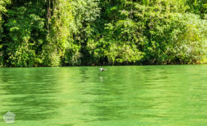 Beautiful Rio Dulce | Travel guide to Rio Dulce and Livingston in the Caribbean side of Guatemala | FinnsAway Travel Blog