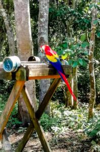 Copan Mayan ruins and the town of Copan Ruinas in Honduras | FinnsAway Travel Blog