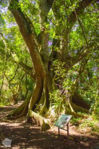 Los Naranjos Archaeological & Ecological Park | Lago de Yojoa Lake, Honduras | FinnsAway Travel Blog