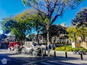 Horse cart is one way of sightseeing in Guadalajara, Jalisco, Mexico   FinnsAway Travel Blog